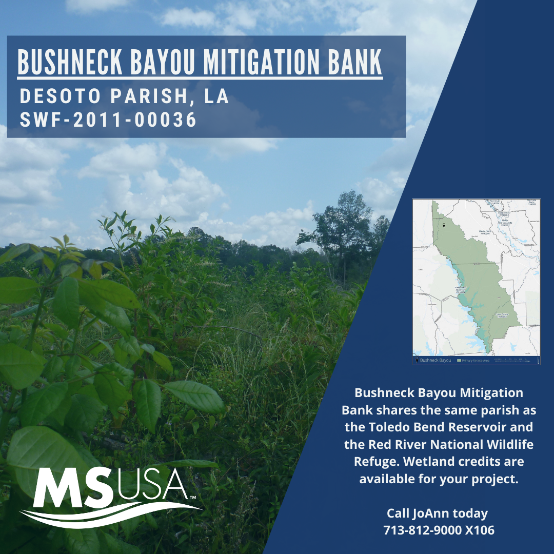 Bank Highlight: Bushneck Bayou