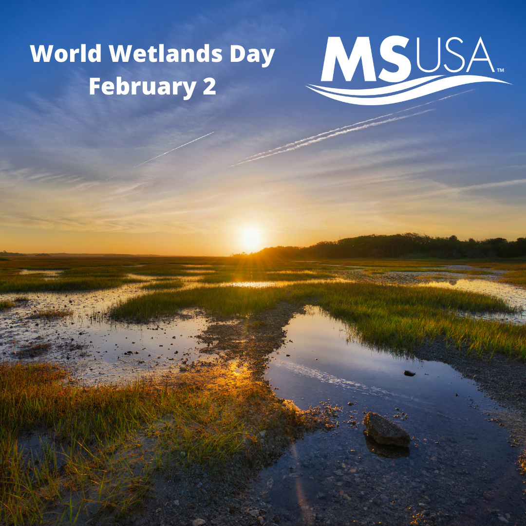 World Wetlands Day – February 2