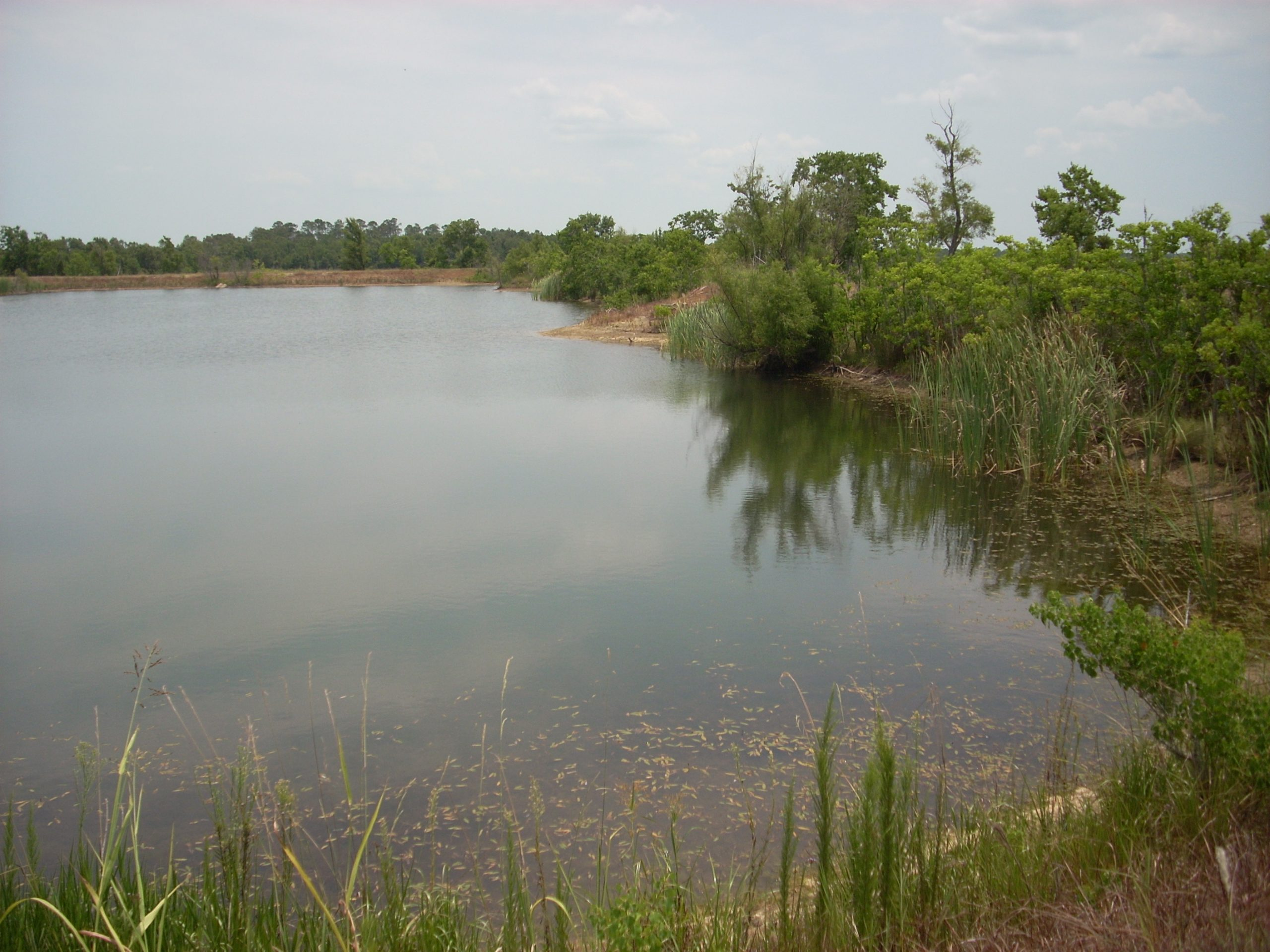 How is a site selected for the creation of a mitigation bank?
